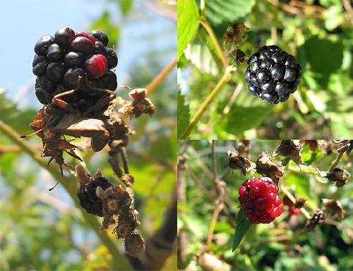 http://michirukaioh.free.fr/taistoietmange/divers06-09-09/mures.jpg